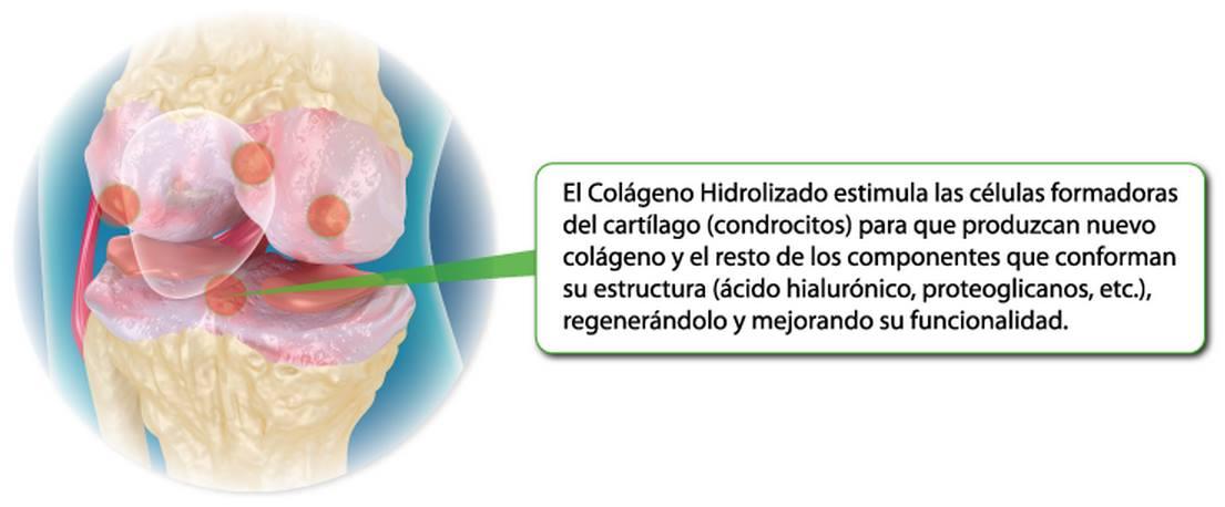 colageno hidrolizado
